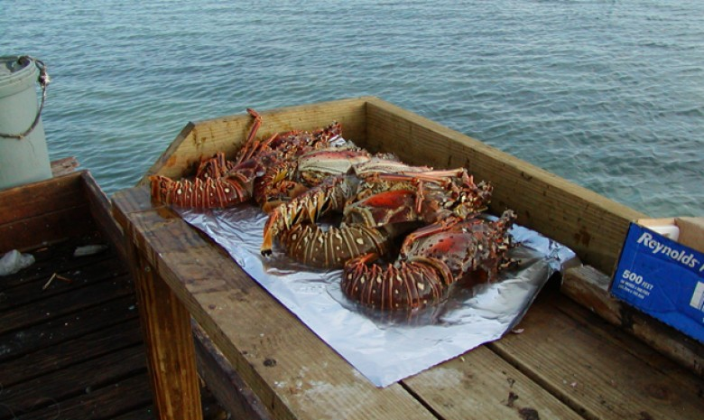 Custom Sailing Gets Only The Freshest Lobster