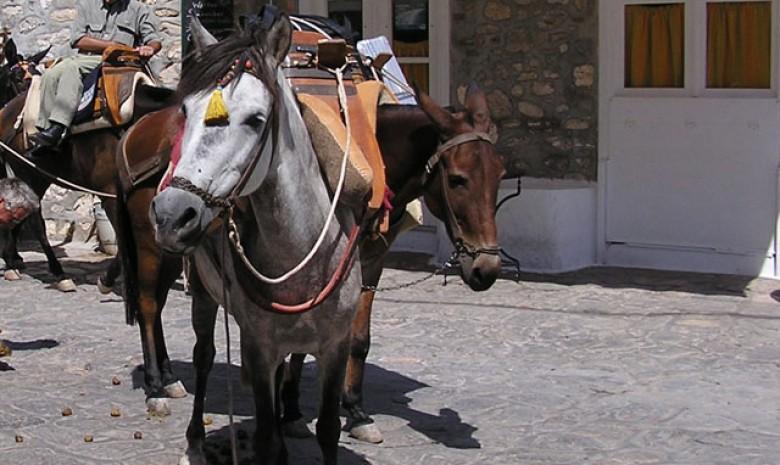 Hydra Donkeys